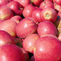 FV;Apples;RoyalGala