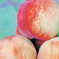 FV;Peaches;Anzac