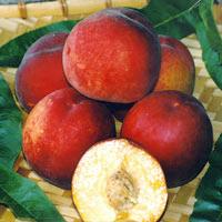 FV;Peaches;Flavorcrest