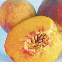 FV;Peaches;MillionDollar