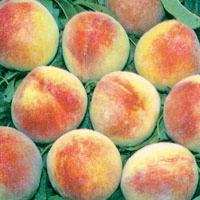FV;Peaches;OHenry