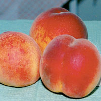 FV;Peaches;RedHaven