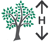 height_icon
